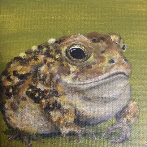 Tiny Toad