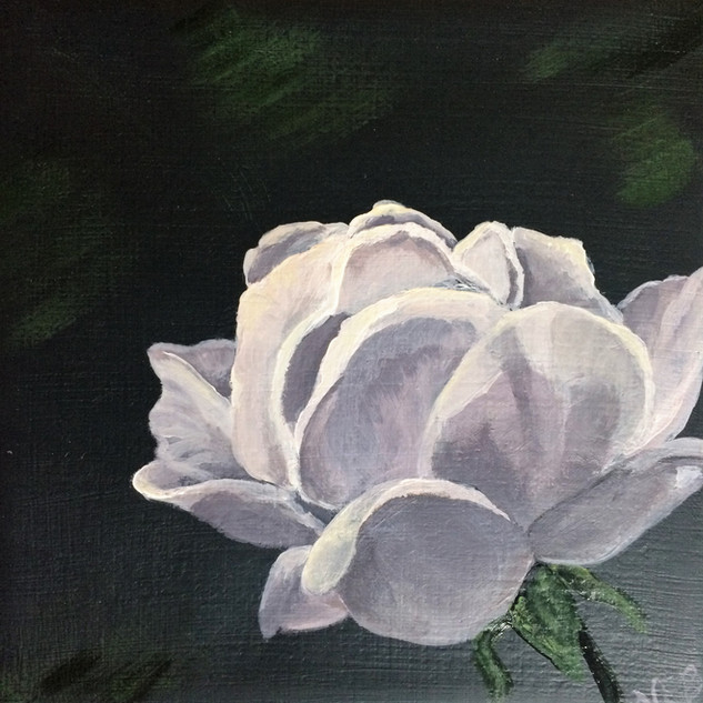 White Queen - DONATED