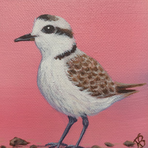 """""""Piping Plover Girl"""""""