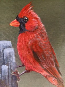 """SOLD""""Little Gentleman Cardinal"""""""