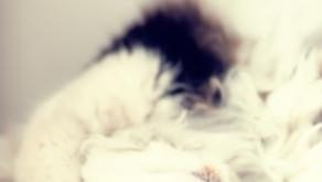 Terapias con Animales, acompañamiento mutuo