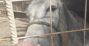 Voluntariado en Animal Academy, Tisan y la vuelta a casa