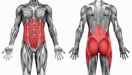 Here you'll find the muscles who together are called the core