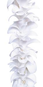 SINGLE.WHITE