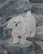 Pup on Rocks
