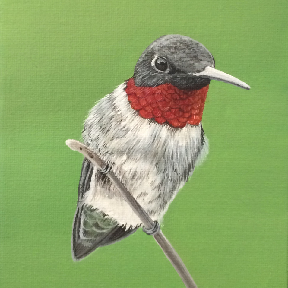 Ruby Throated Hummingbird, 2018
