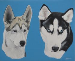 Two Huskies, 2017