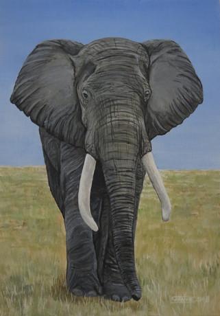 Elephant, 2018
