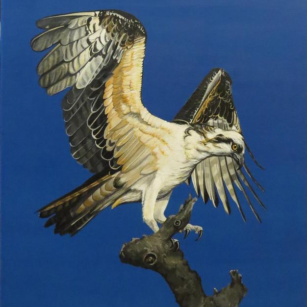 Osprey .JPG