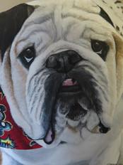 Close up, Brutus