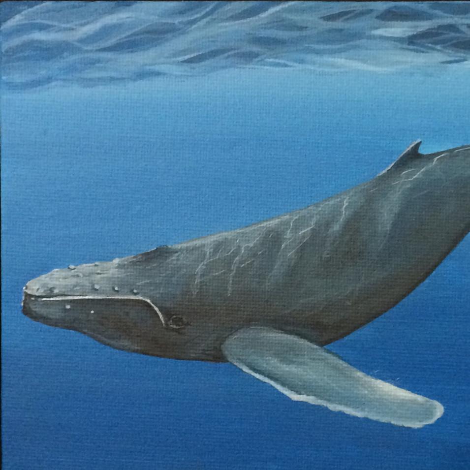 Humpback Whale, 2018