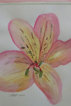 Donated Pink Lilly