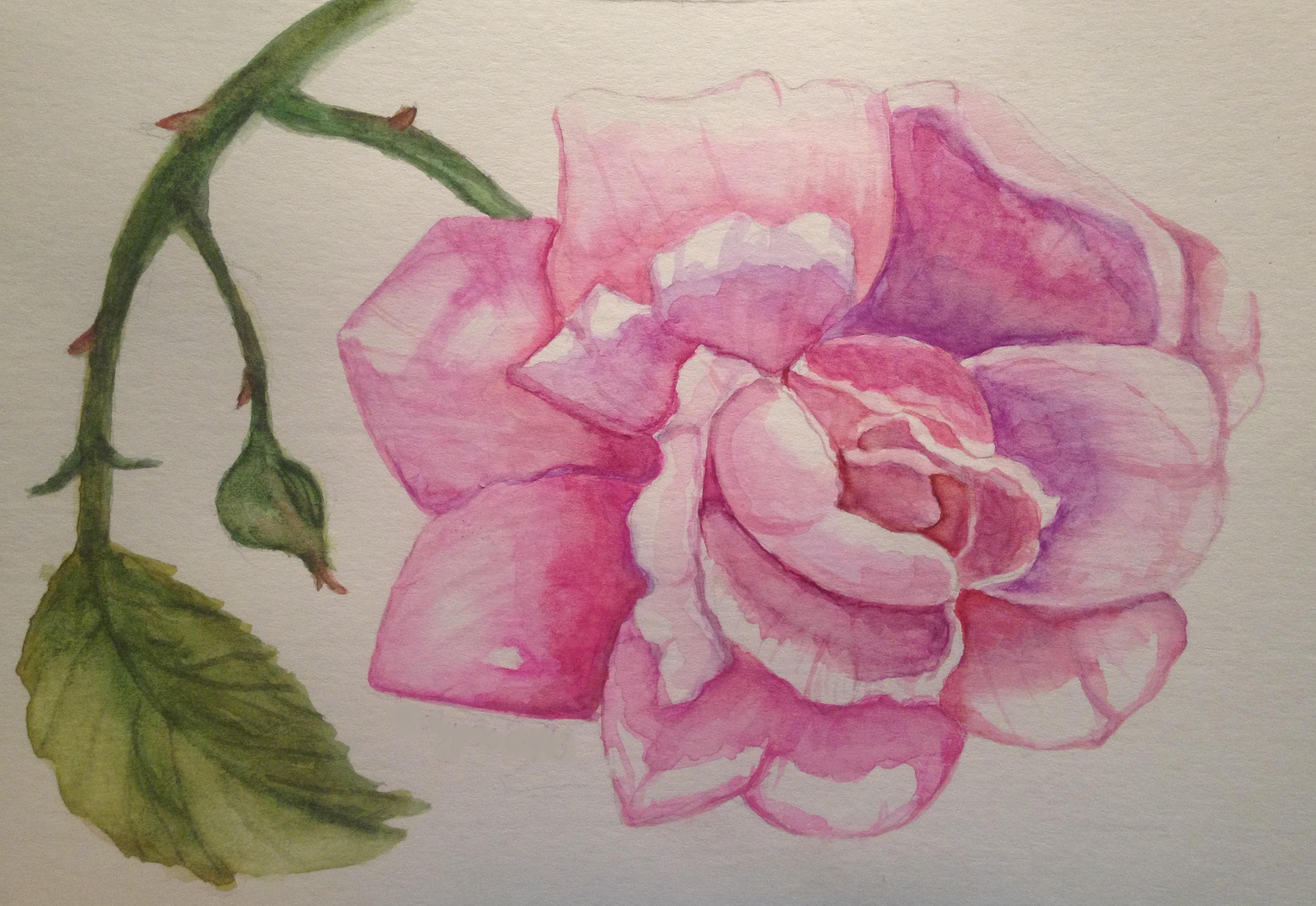 SOLD Pink Rose