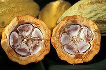 cacao-pod-1916418_640.jpg