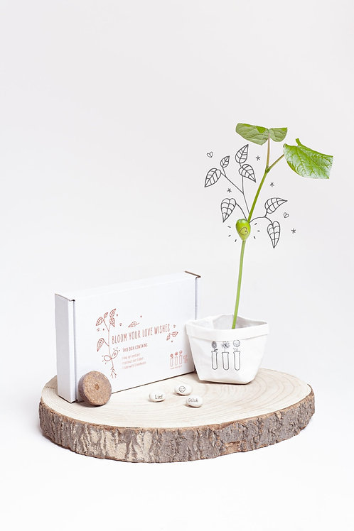 Wish box: Bloom your love wishes