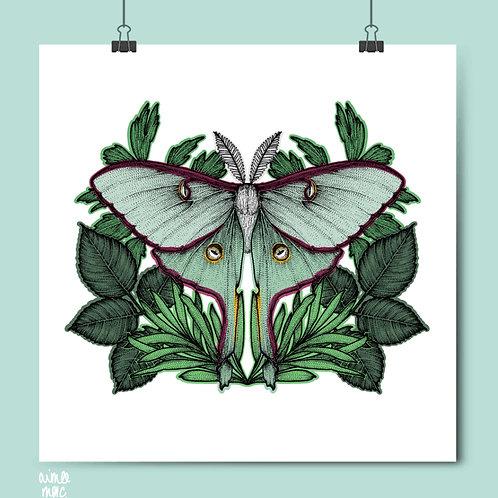Luna Moth Print- Aimee Mac