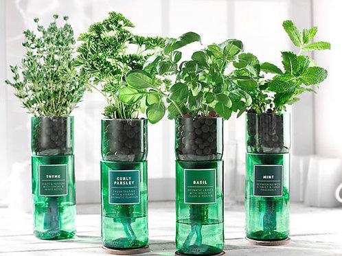 Hydro Herb Kits- Choice Of 9 Herbs