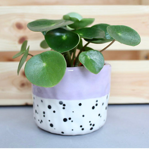 Small Polka Dot Lilac Ceramic Pot