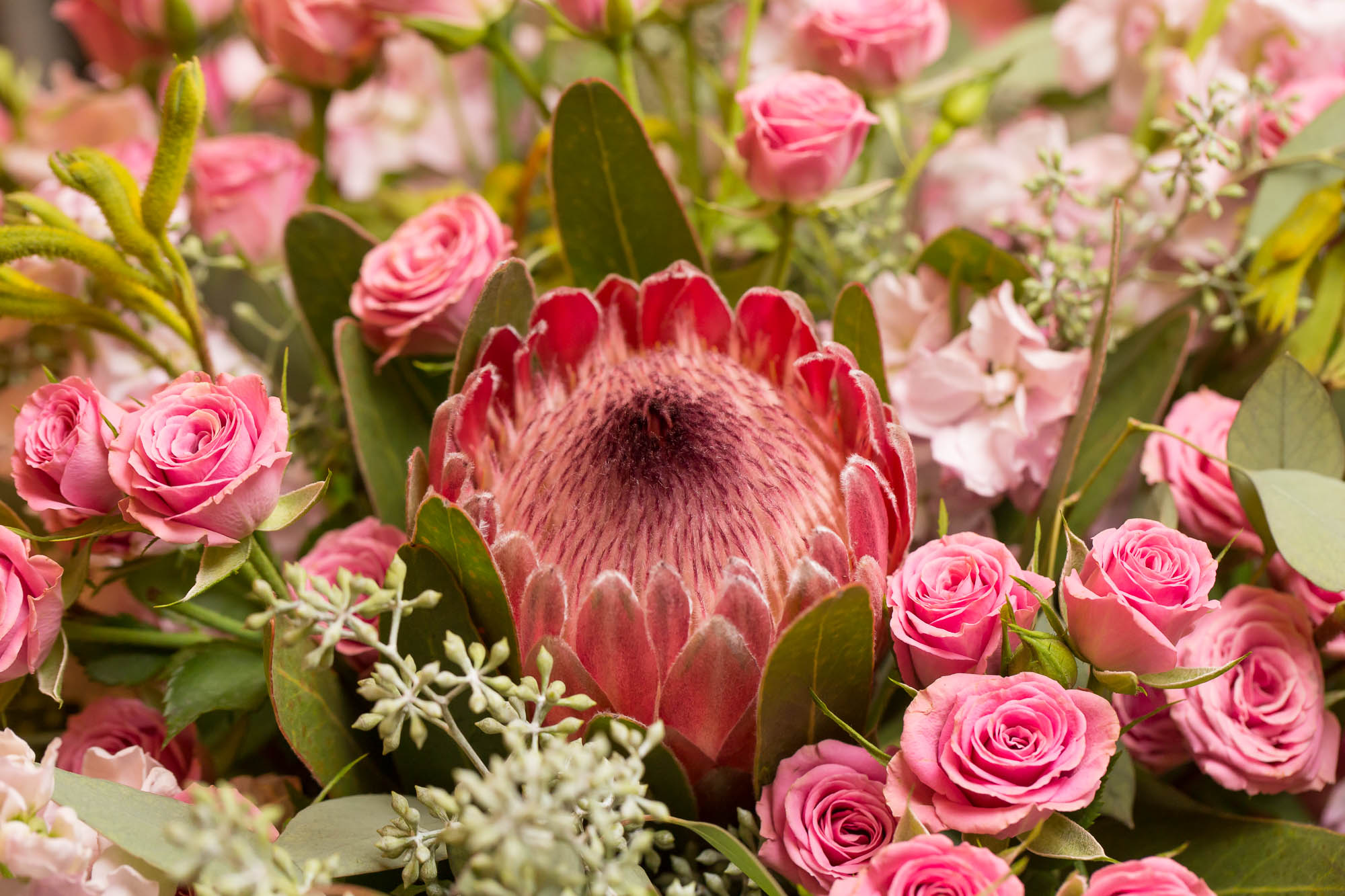 Protea, Spray Roses, Gillyflower