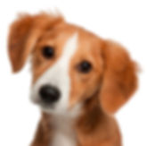 Group Puppy Classes at the CocoMutt Hut in Medicine Hat