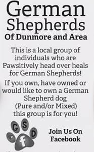German Shepherd Group Dunmore Cypress County