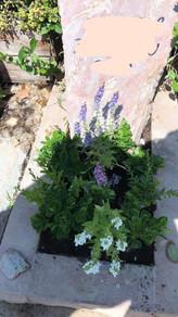 מצבה אבן - נטיעת פרחים בשטח הקבר.jpeg
