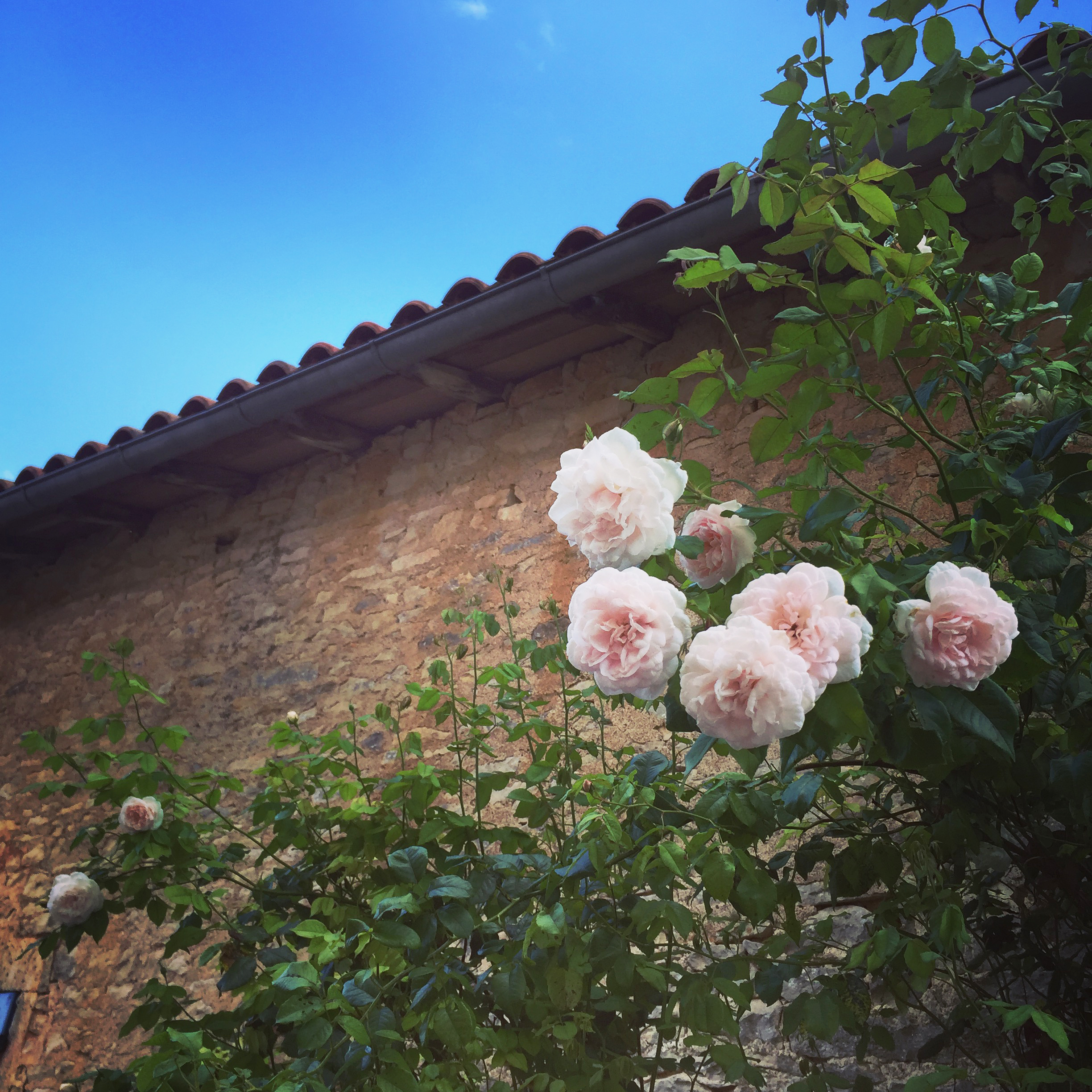 self catering charente holiday