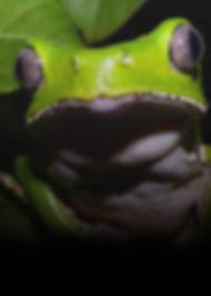 Planet-Kambo-Frog.jpg