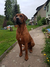 Adamu vom Kiliansberg 2014 (2).jpg