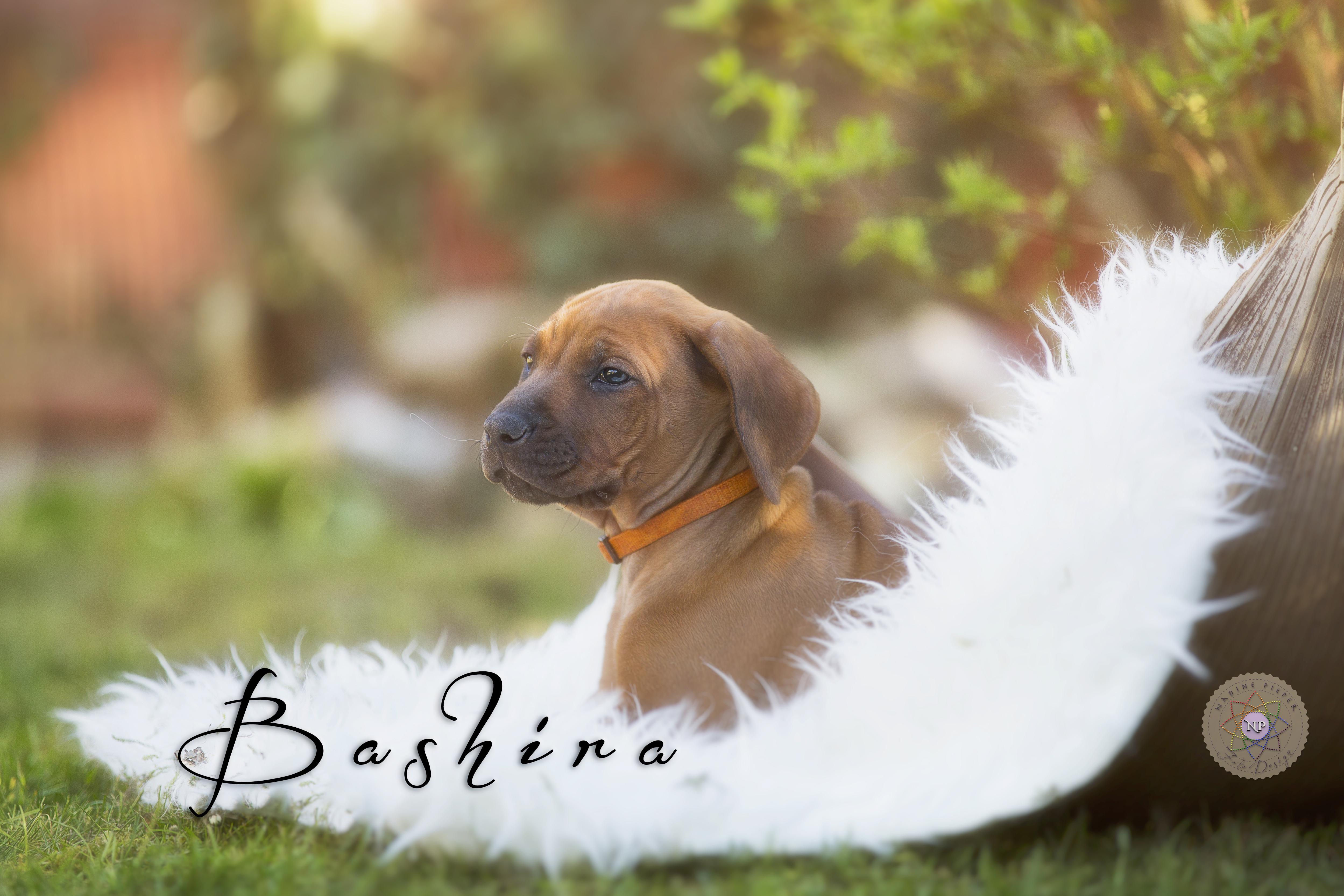 bashira Kopie