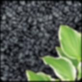 BlackPeb-01.png