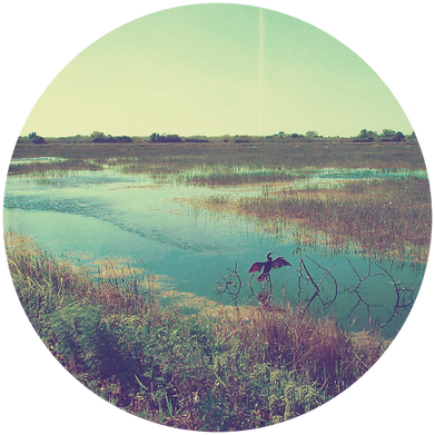 circle everglades.png