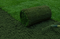 PRODUCT Turf.png