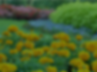 RESOURCES Flowers.png