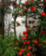 Bhutan_005.jpg