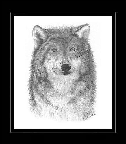 Wolf Port