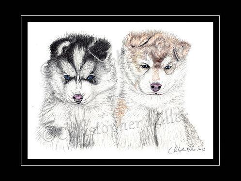 Siberian Husky Wolf Pups