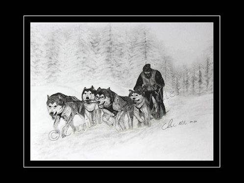 Dog Sled Races