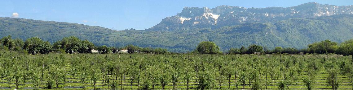 Terre-de-Goji-Isère-Alpes-Goji-Bio-France-Exploitation.jpg