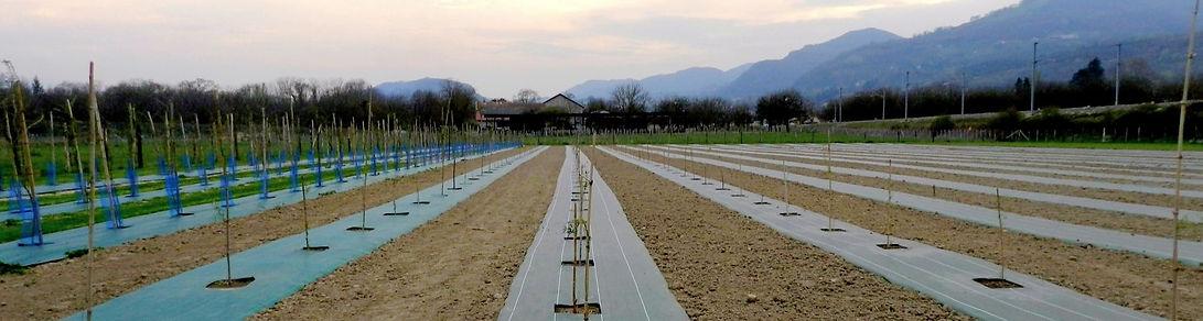 Exploitation agricole - Terre de Goji