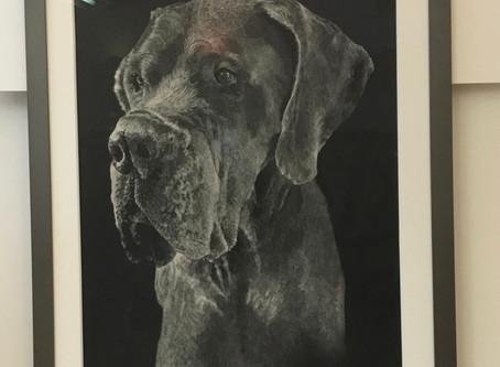 Custom Frame Your Pet Month at Art Frame Solutions, Reston VA