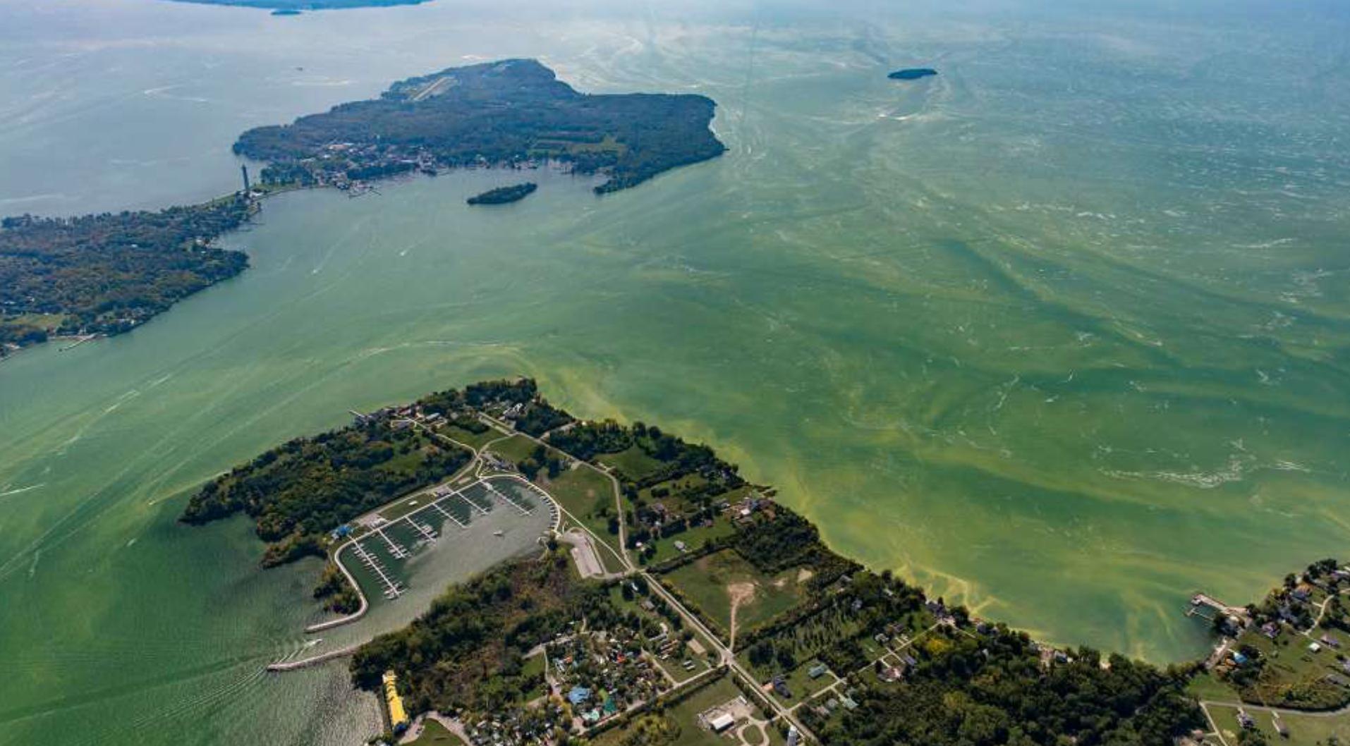 Walleye Charter: Lake Erie