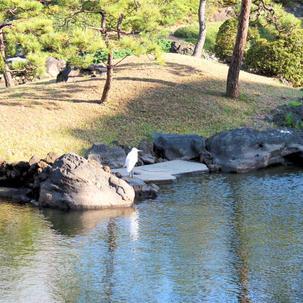 Japanese garden 日本庭園