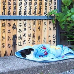a cat in Ekoin Temple