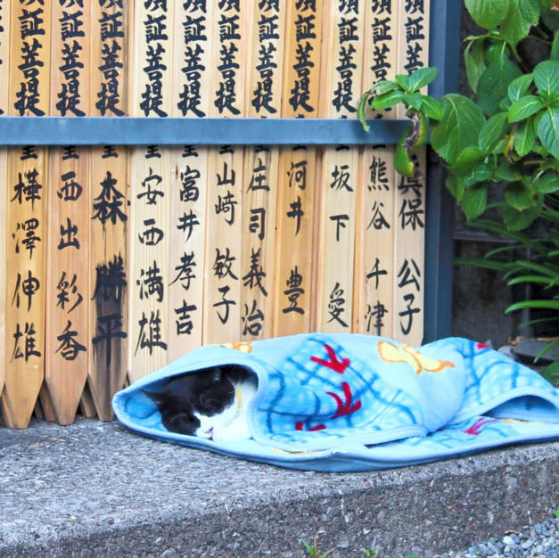 a cat in Ekoin Temple