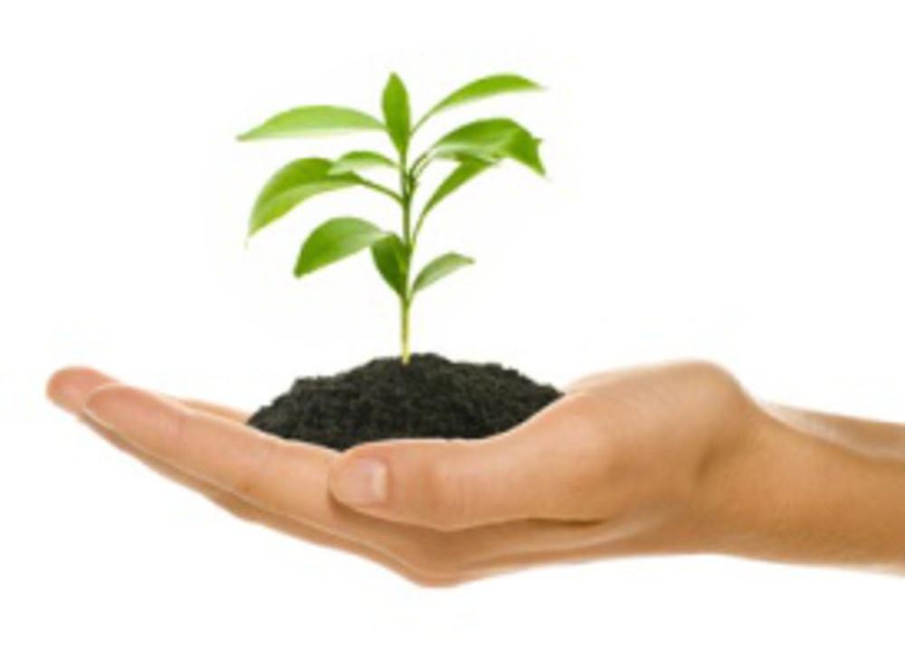 entretien de jardin, paysagiste biscarrosse