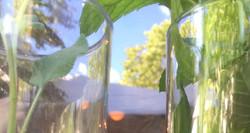 Sun plants window