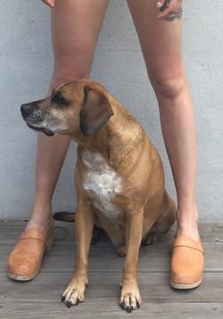Dog paws women's clogs