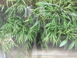 Julia Stacy window plant reflection