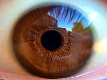 目は心の鏡 ~からだの声~